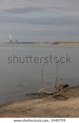 Dead branch on the beach with Perry plant in the distance - stock photo