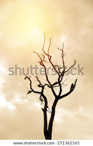 Dead branch tree. Vintage filter. - stock photo