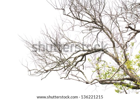 Dead branches - stock photo