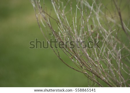 Dead branches of a tree with green background