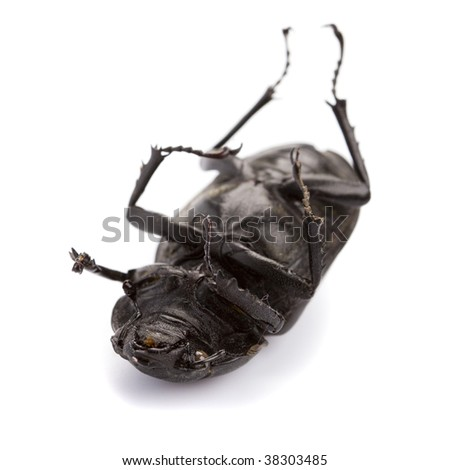 dead bug isolated on white background - stock photo