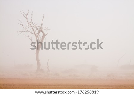 dead camel-thorn tree in front of a white sand storm in the Namib desert, Naukluft Park, Namibia, Africa - stock photo