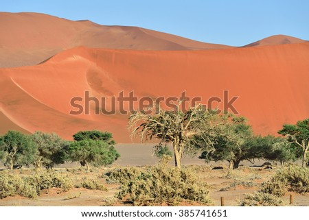 Dead Camelthorn Trees against a red dunes in Namib-Naukluft National Park at sunrise, Namibia, Africa. - stock photo