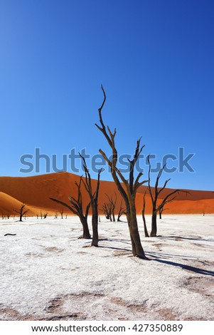 Dead Camelthorn Trees against an orange dunes and blue sky in Deadvlei, Sossusvlei. Namib-Naukluft National Park, Namibia, Africa - stock photo