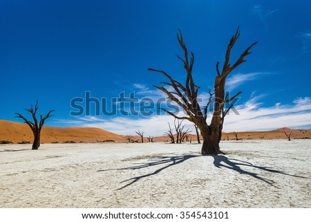 Dead Camelthorn Trees against blue sky in Deadvlei, Sossusvlei. Namib-Naukluft National Park, Namibia, Africa. - stock photo