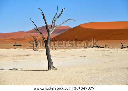 Dead Camelthorn Trees against red dunes and blue sky in Deadvlei, Sossusvlei. Namib-Naukluft National Park, Namibia, Africa.