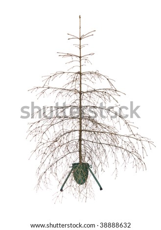 Dead christmas tree isolated on a white background