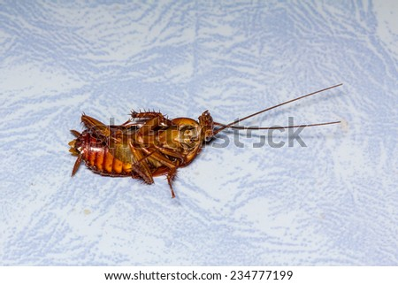 Dead cockroach isolated - stock photo