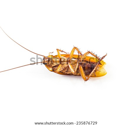 Dead cockroach isolated on a white - stock photo