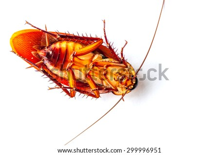 Dead cockroach isolated on a white