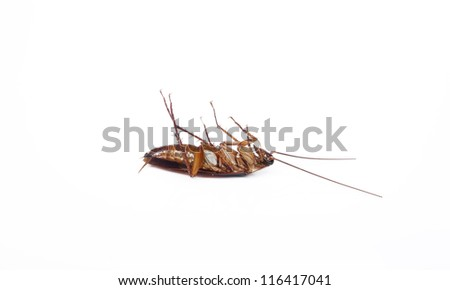 Dead cockroach isolated on a white background. - stock photo