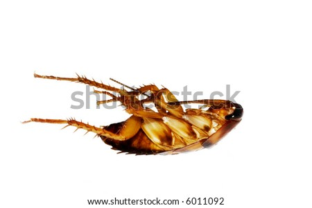 dead cockroach isolated on white