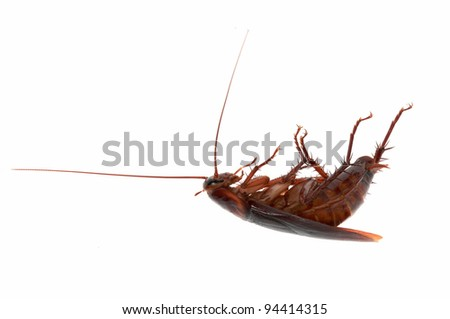 Dead Cockroach Isolated on White - stock photo