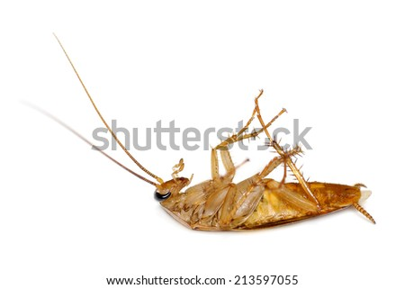 Dead Cockroach isolated on white. Taken from side.  - stock photo