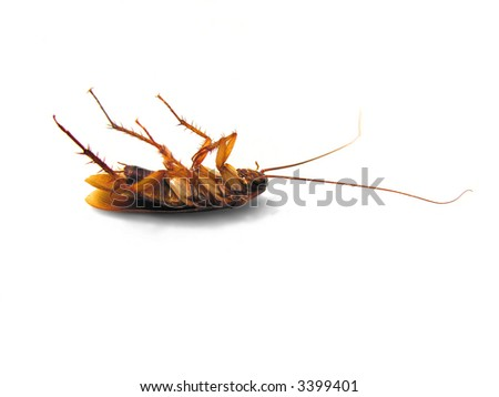 Dead Cockroach on his back - isolated on white Surface - stock photo