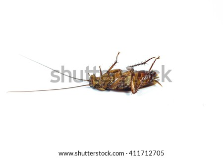 Dead cockroach on white background.