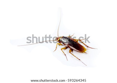 dead cockroach on white background caption : I intend focus to f