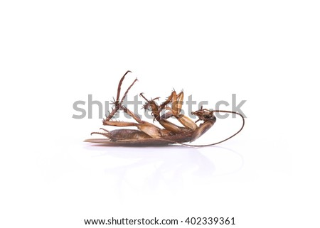 dead cockroach on white background. taken from side.