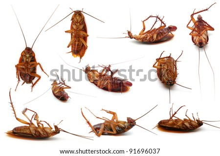 Dead cockroaches - stock photo