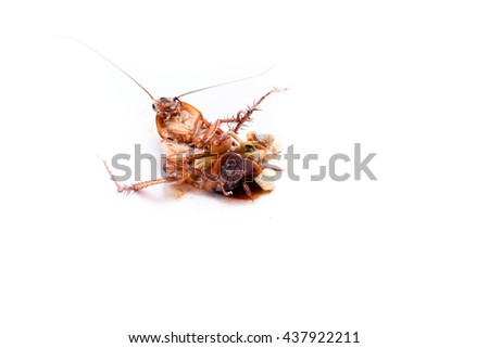 Dead cockroaches and collapse on the white floor. - stock photo