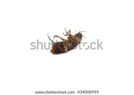 Dead cockroaches blur on white background. - stock photo