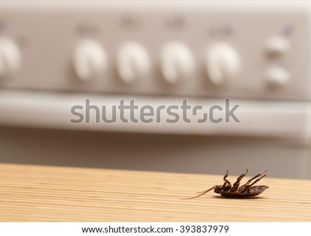Dead cockroaches in an apartment kitchen. Inside high-rise buildings. Fight with cockroaches in the apartment. Extermination. - stock photo