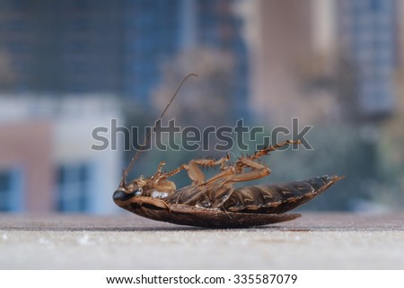 Dead cockroaches in an apartment window. Outside, the yard, high-rise buildings. Fight with cockroaches in the apartment. As grass insect - stock photo