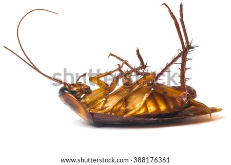 Dead cockroaches isolate white background