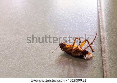 Dead cockroaches on floor. - stock photo