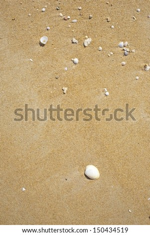 Dead Coral and shell on beach - stock photo