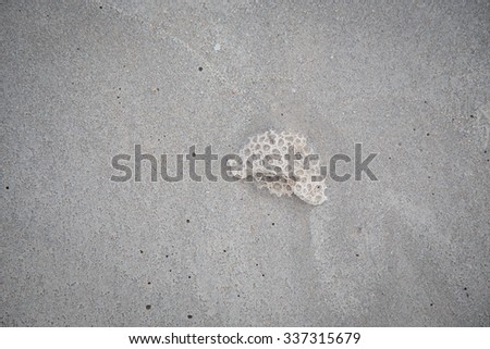 dead coral on sand
