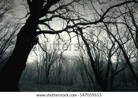 Dead dark winter tree in the forest. Nature in woods. Black and white picture.