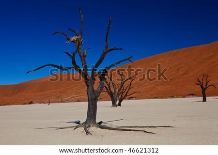 Dead Desert scene - stock photo