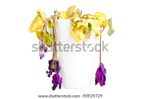 Dead dry flowers in a white pot isolated over white background - stock photo