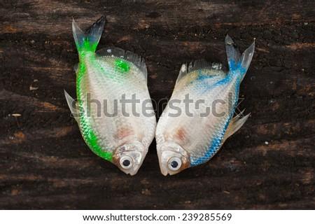 Dead fish  - stock photo