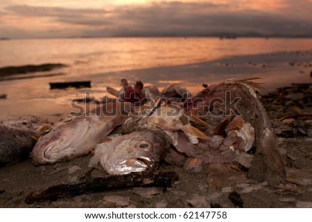 Dead fish at the beach after some environmental disaster, sunset time. - stock photo
