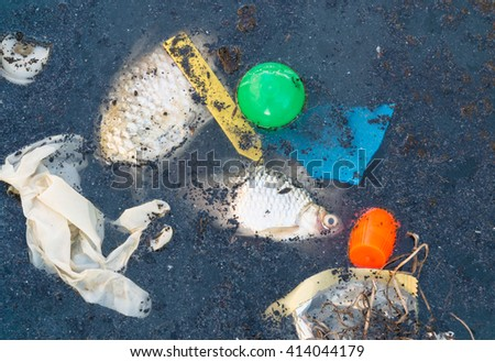 Dead fish in waste water and garbage in pool. Environment concept. - stock photo