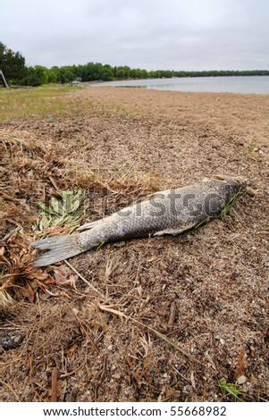 dead fish lying on beach next to a lake - stock photo