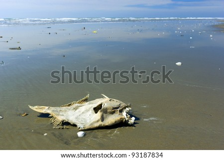 Dead fish on beach on pacific stock photo 93187834 shutterstock dead fish on a beach on the pacific coast of ecuador publicscrutiny Images