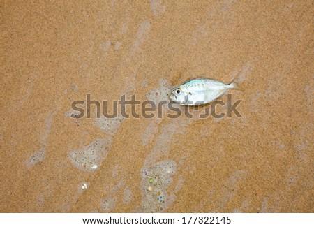 Dead fish on a sea shore - stock photo