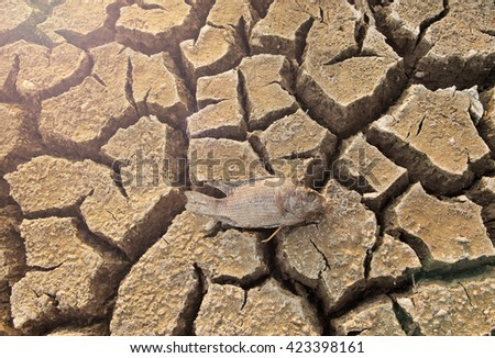 dead fish on cracked earth at drought lake heat