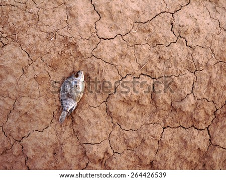 dead fish on drought land background - stock photo