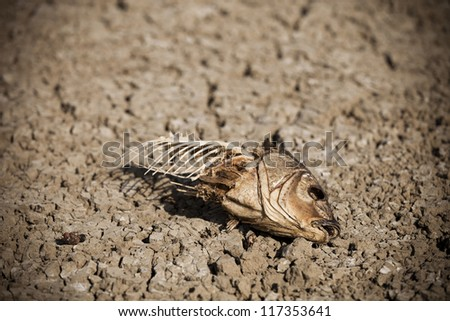 Dead fish on dry soil - stock photo