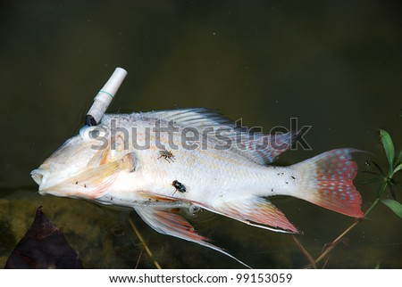 Dead fish pollution victim - stock photo