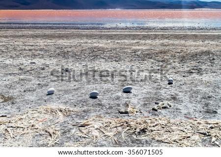 Dead flamingos and flamingo eggs on a coast of Laguna Colorada lake on bolivian Altiplano - stock photo