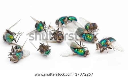 dead fly pile - stock photo