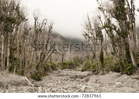 Dead forest - destroyed by a volcano eruption - stock photo