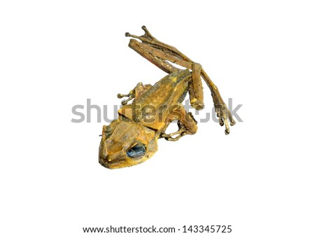 Dead frog. - stock photo