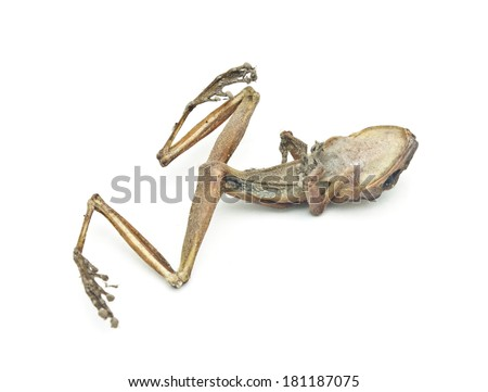 Dead frog on white background. - stock photo