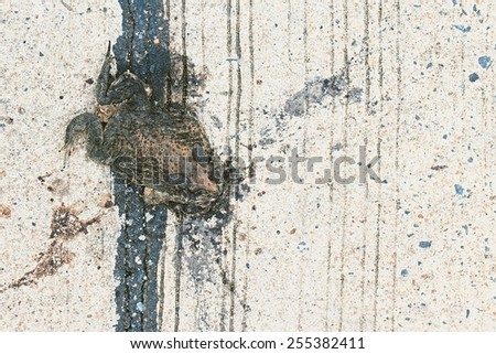 Dead frog road kill , Toad crushed to death by Car. - stock photo